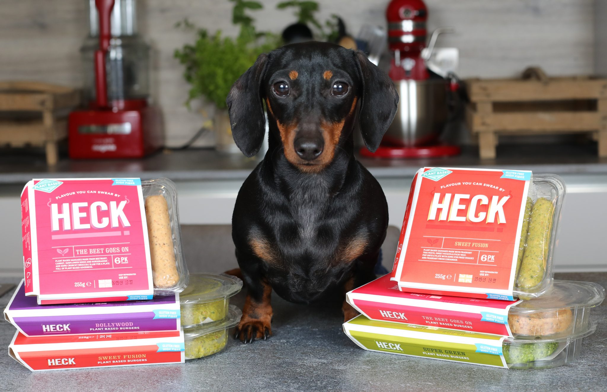 Honey the vegan sausage dog HECK